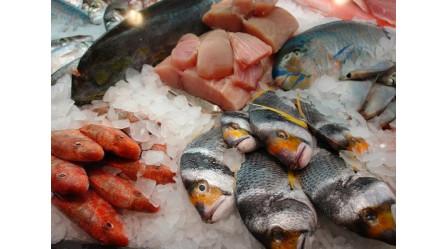 Embalajes isotérmicos: importancia en el transporte de alimentos
